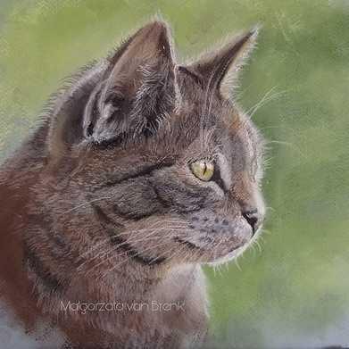 kot szaruś