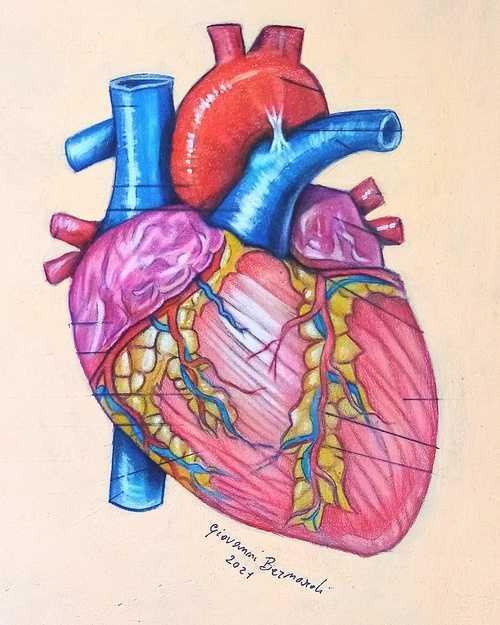 Anatomia del cuore. Pastello carbothello su carta pastelmat. 0