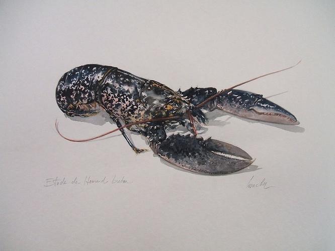 étude de homard breton 0