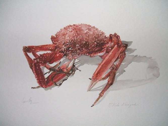 étude d'araignée 0
