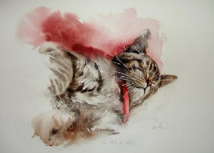Le chat dort 0