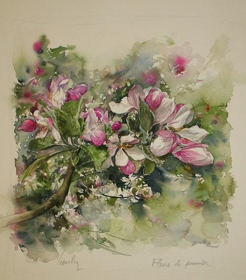 Fleurs de pommier 0