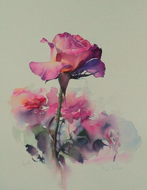 Roses bicolores 0