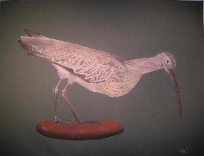 oiseau des marécages 0