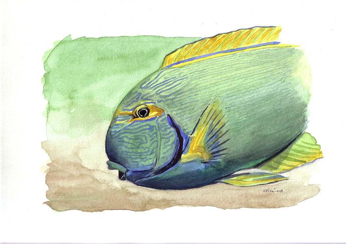 poisson en aquarium 0