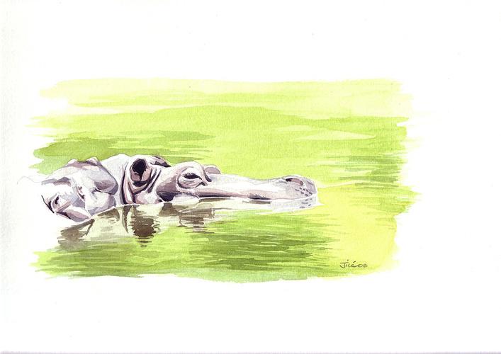 Hippos en observation 0