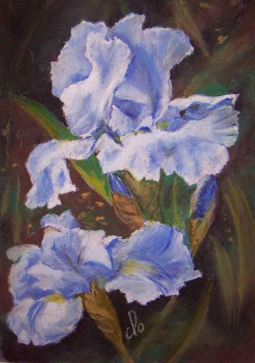 Iris à Giverny 0