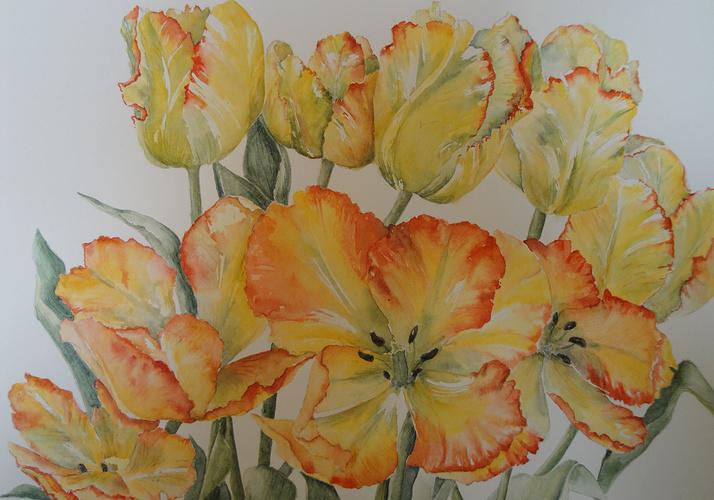 Bouquet de tulipes perroquet 0