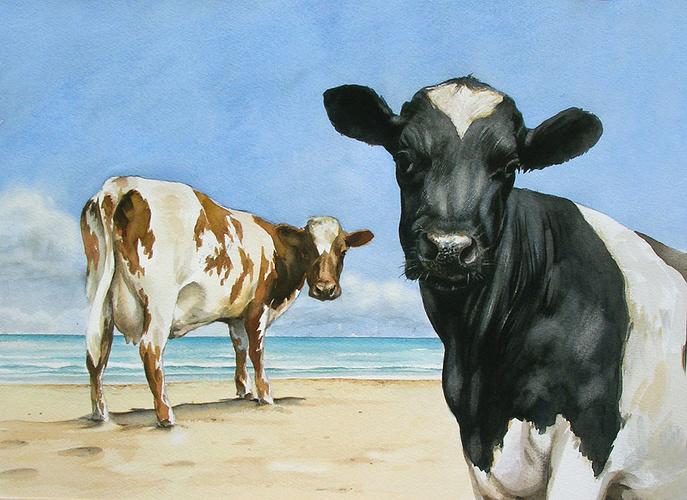 suite des vaches perdue 0