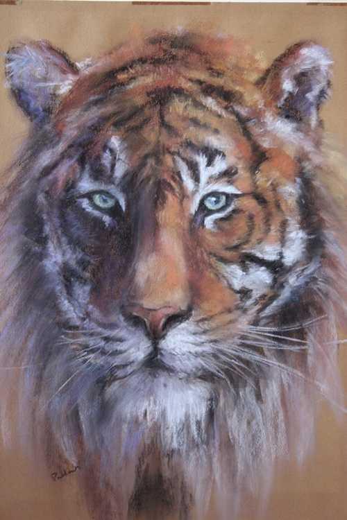 Le tigre 0