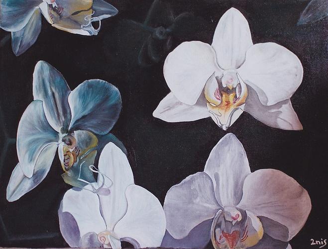 Orchidées 0