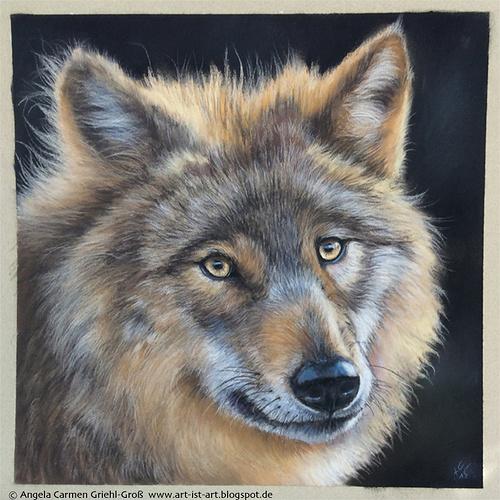 Le Loup 0